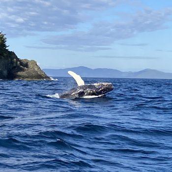 Whale near Naked Island