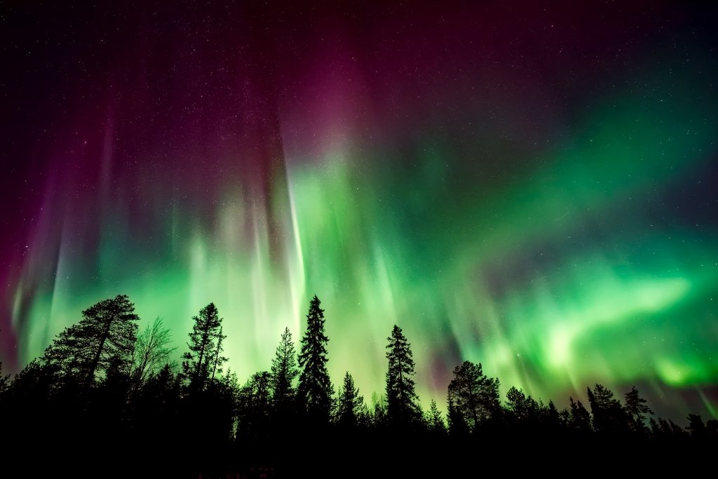 Green and purple aurora over a forest