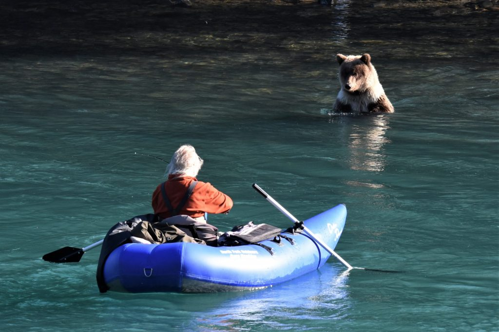 Brown bear cub looks at a guy in raft floating past on the Kenai River
