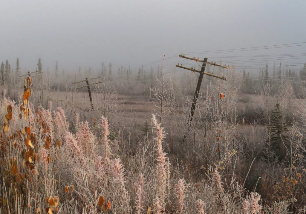 Telephone poles lean at odd angles amid frost-covered trees and grass